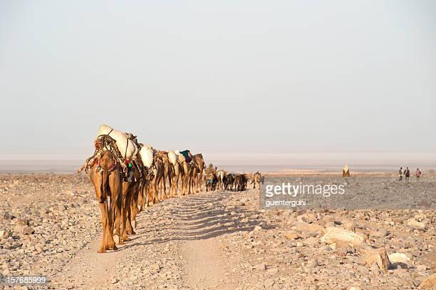 キャメルの caravan に向かって danakil 砂漠、エチオピア - ジブチ共和国 ストックフォトと画像