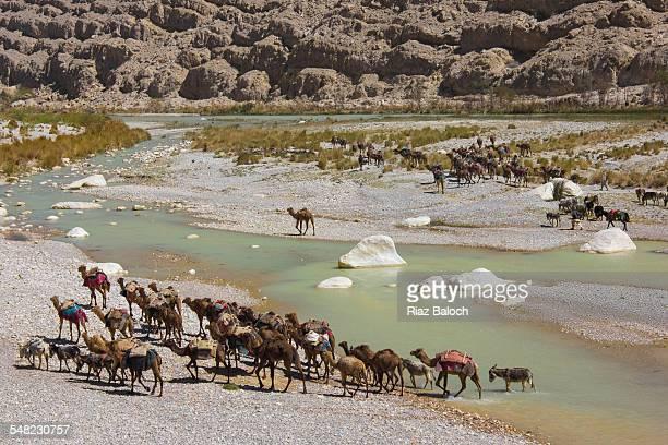 Camel caravan passing through Bolan Pass