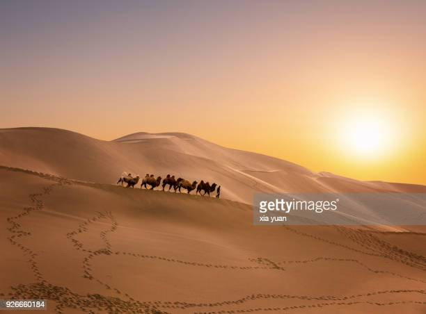 a camel caravan passing through the sand dunes against sunset - country geographic area stock pictures, royalty-free photos & images