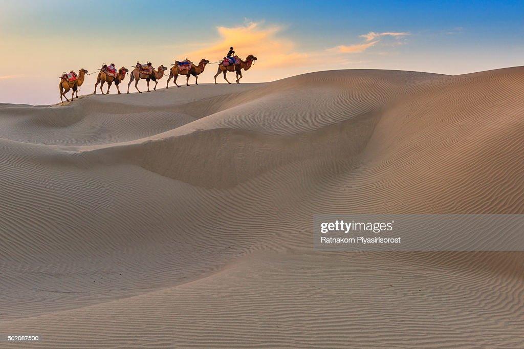 Camel Caravan Travel in Dessert : Stock Photo