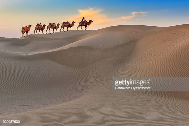 camel caravan travel in dessert - camel train stock pictures, royalty-free photos & images