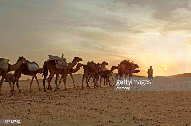camel caravan travelling through desert - mali stock pictures, royalty-free photos & images