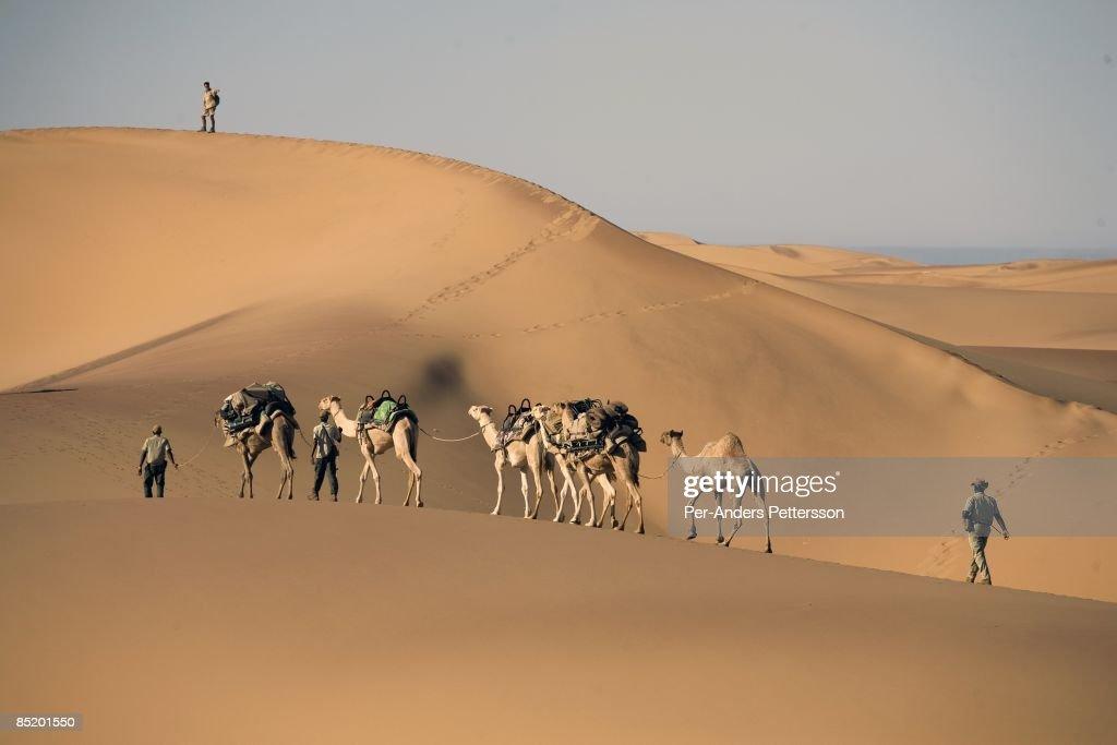 Namibia Safari : News Photo