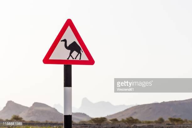Camel Crossing Dign, Al Hamra, Ad Dakhiliyah, Oman