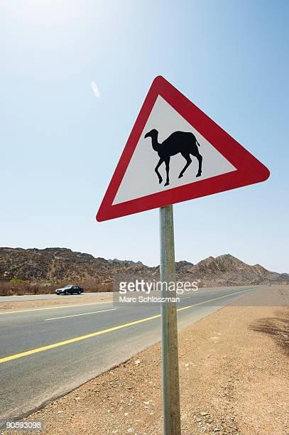 Camel crossing road sign, Saudi Arabia