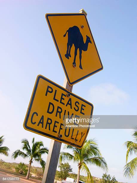 camel crossing sign - animal crossing stock pictures, royalty-free photos & images