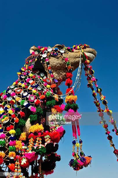 Camel decorated for the Desert Festival