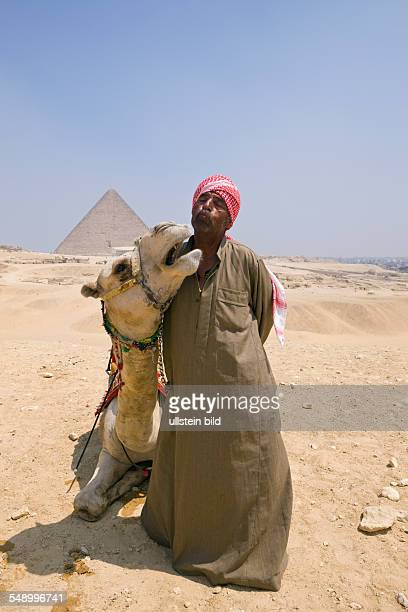 Camel Driver in Front of Pyramid of Cheops Cairo Egypt