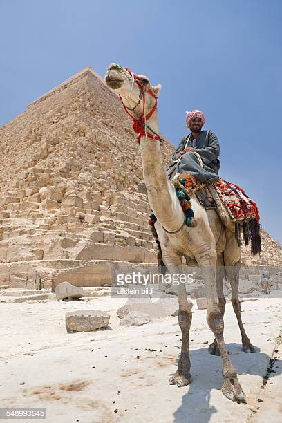 Camel Driver in Front of Pyramid of Khafra Cairo Egypt