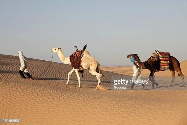 Camel drivers in the Sahara desert Douz Tunisia