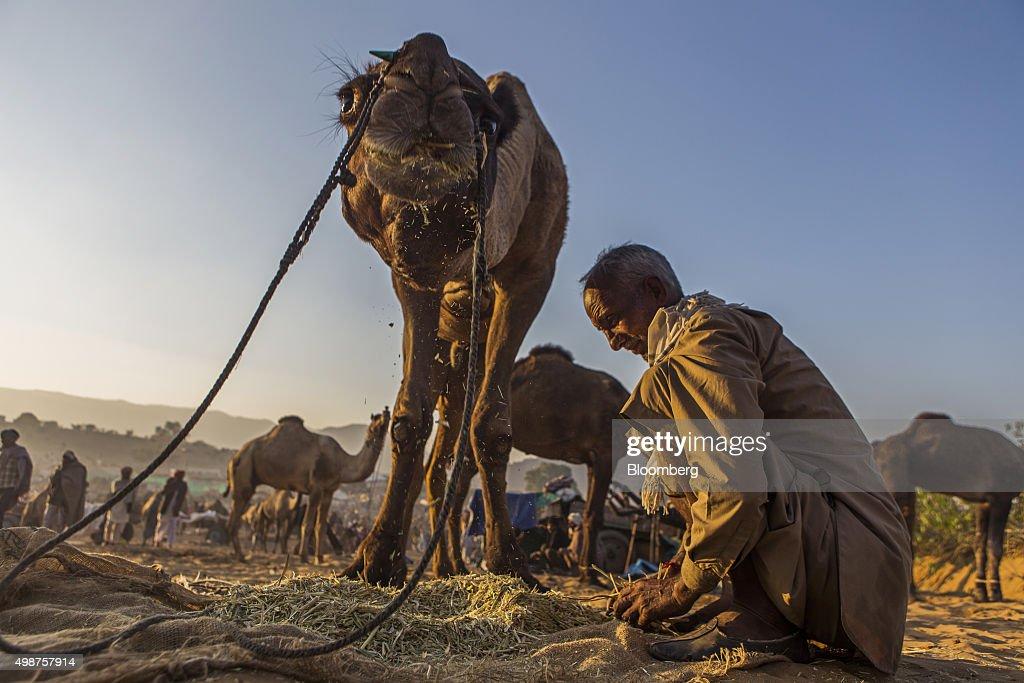 Pushkar Camel Fair Lights Up the Indian Thar Desert : News Photo