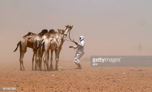 A camel herder guides his animals during a sandstorm at a camel market on the edge of the capital Khartoum on April 20 2013 AFP PHOTO/IAN TIMBERLAKE