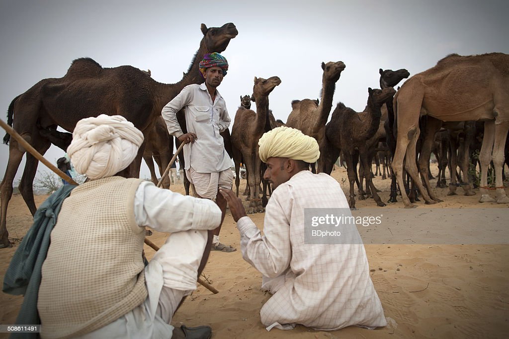 Camel herders at Pushkar, India : Stock Photo