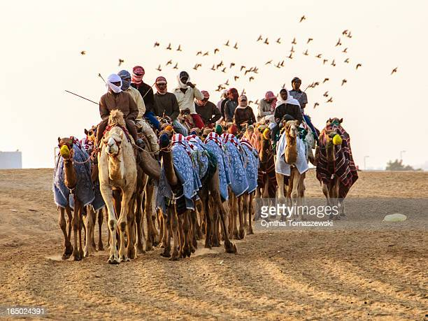 Camel herders exercising camels at dawn. All camels are covered with blankets to protect them from the cold and the herders are bundled up as well.