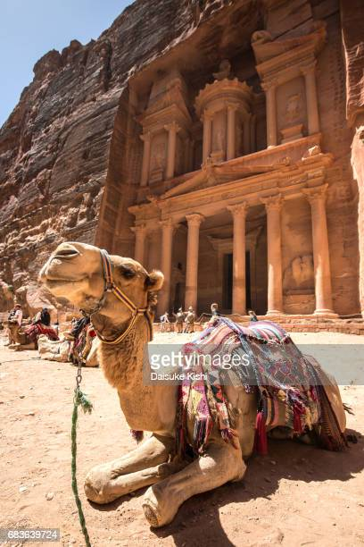A Camel in front of 'The Treasury' in Petra, Jordan