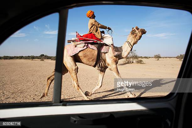 camel in the thar desert - hugh sitton stockfoto's en -beelden