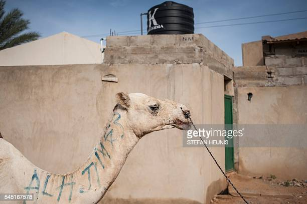 TOPSHOT A camel is led through the Emirate's palace walls ahead of the Eid alFitr celebration which marks the end of Ramadan in Kano northern Nigeria...