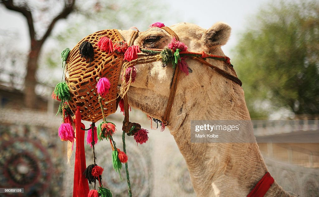 A camel is seen at the Rock Garden on March 26 2010 in Chandigarh India The 12acre Rock Garden which began as secret project of Nek Chand in 1957 was.