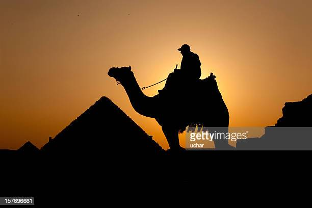 Camel journey into sunset
