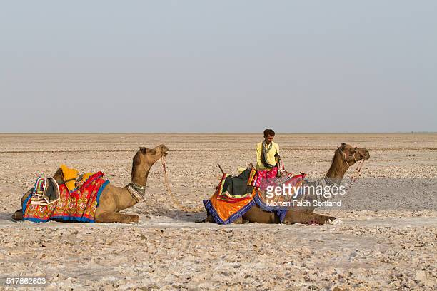 Camel owner and his two camels resting in the salt desert Rann of Kutch not far from Bhuj in Gujarat On the other side of the desert is the border to...