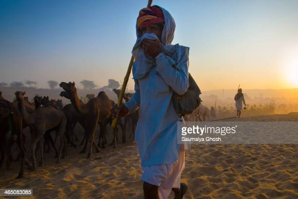 CONTENT] A camel owner taking his flock of camel to the Pushkar fair ground at Rajasthat India