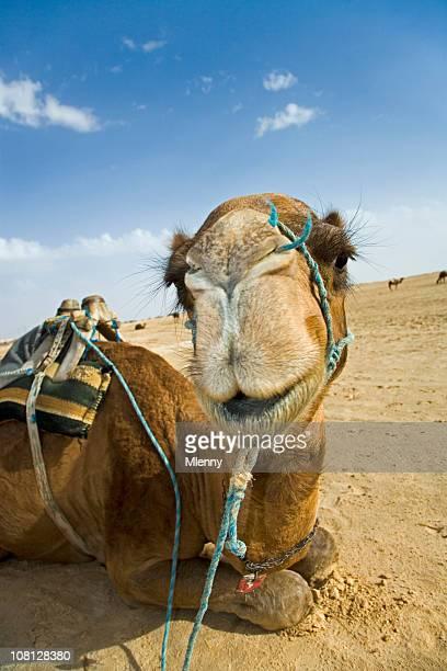 camel porträt sahara desert - mlenny stock-fotos und bilder