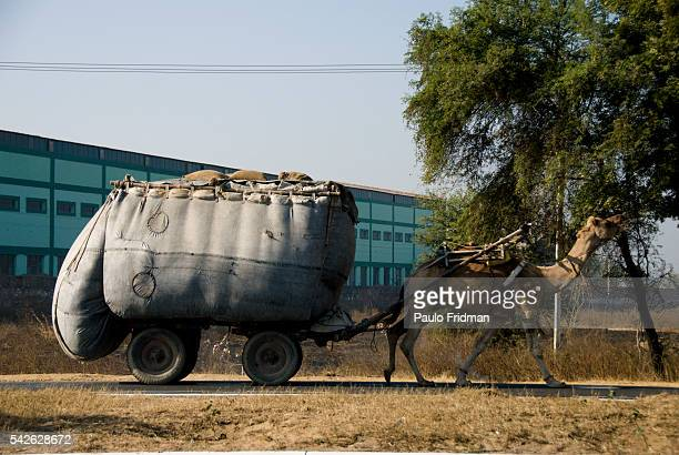 Camel pulls a cart full of bags of grains in Agra Uttar Pradesh India