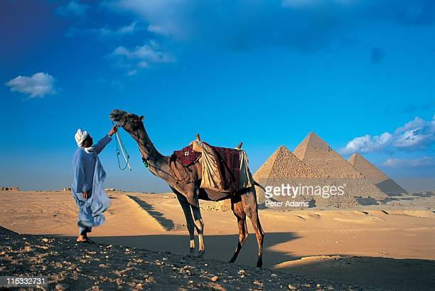 camel & pyramids, cairo, egypt - peter adams stock pictures, royalty-free photos & images