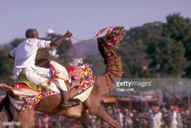 camel racer - pushkar stock pictures, royalty-free photos & images