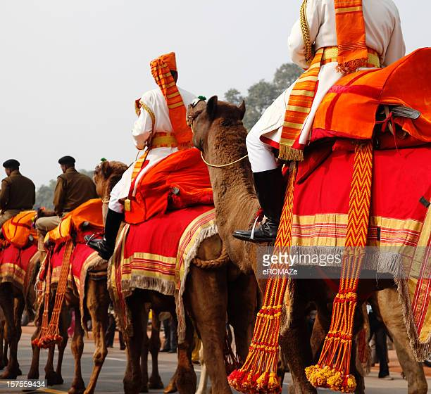 camel regiment - republic day stock pictures, royalty-free photos & images