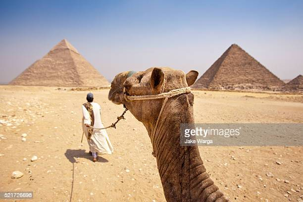 camel ride giza plateau, egypt - giza stock pictures, royalty-free photos & images