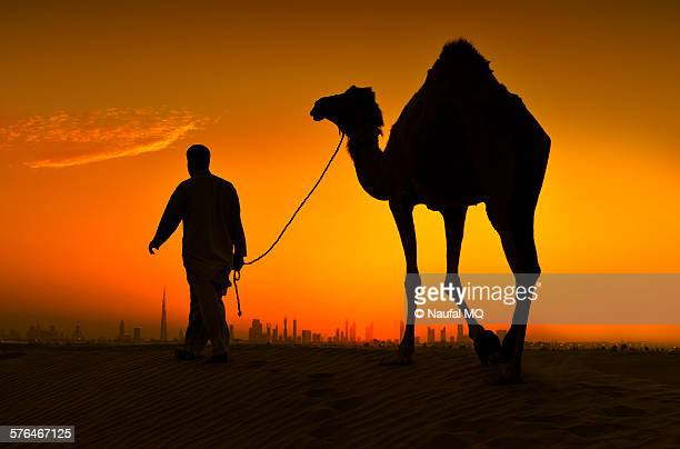 Camel ride in Dubai desert