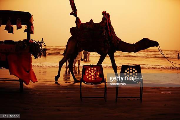 Camel Rider at Clifton Beach, Karachi - Pakistan