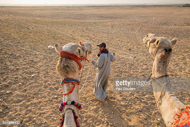 Camel Rides near Pyramids, Cairo, Egypt