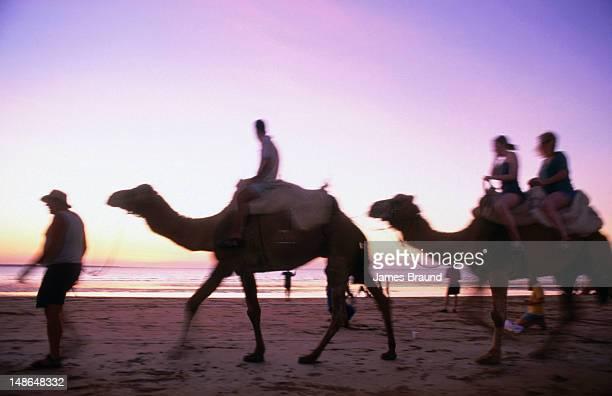 Camel rides on Mindil Beach.