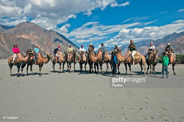 camel riding in nubra valley desert india - pavliha stock photos and pictures