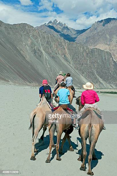 camel riding nubra valley india - pavliha stock photos and pictures