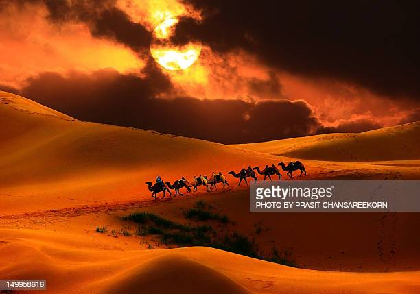 Camel riding on Gobi Desert, Mongolia