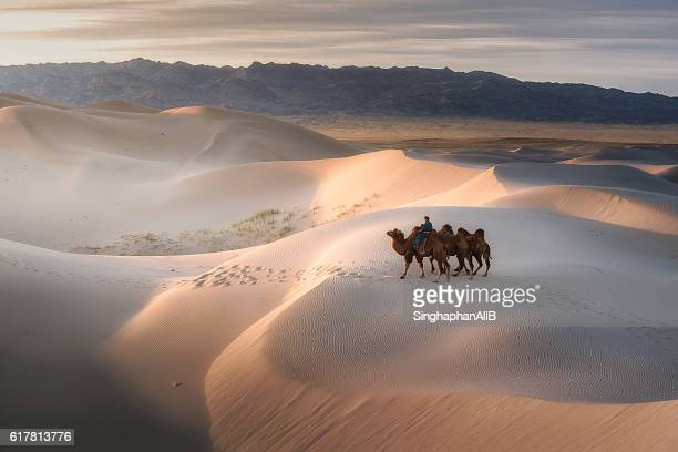 camel riding on gobi desert, mongolia - independent mongolia stock pictures, royalty-free photos & images