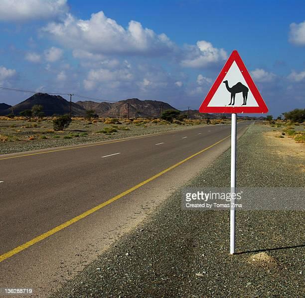 Camel road sign in Oman