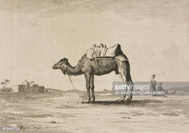 Camel saddled for journey Arabia engraving by Fleury from Arabie by Noel Desvergers avec une carte de l'Arabie et note by Jomard L'Univers...