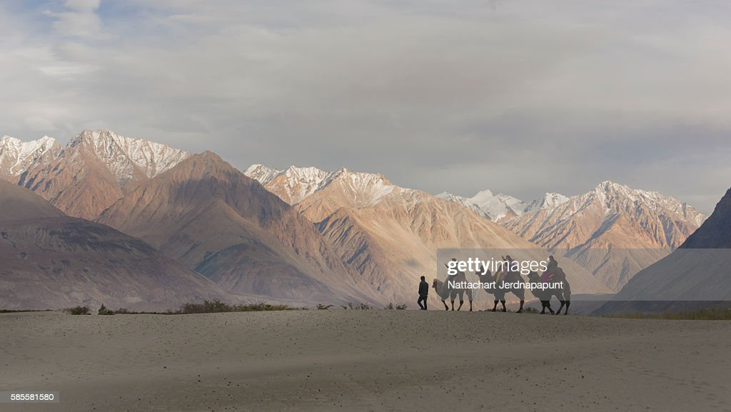 Camel safari in Nubra Valley, Ladakh, India : Stock Photo