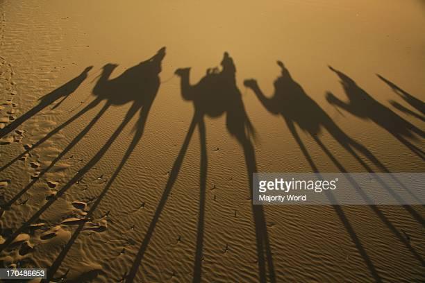 camel safari near Erg Chebbi Merzouga Sahara Desert Morocco