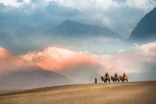 Camel safari Ride caravan in Hunder desert , Nubra valley , Leh Ladakh India 1061972196