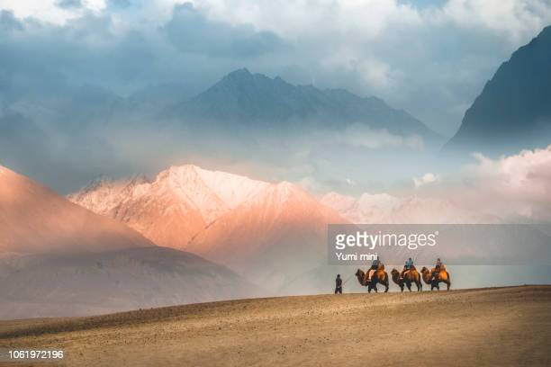 camel safari ride caravan in hunder desert , nubra valley , leh ladakh india - kashmir stock photos and pictures