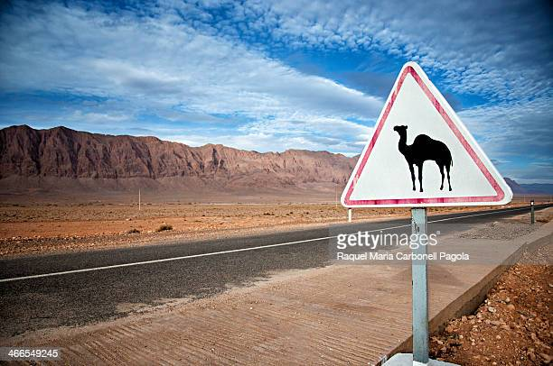Camel sign next to a deserted road crossing the dry hammada