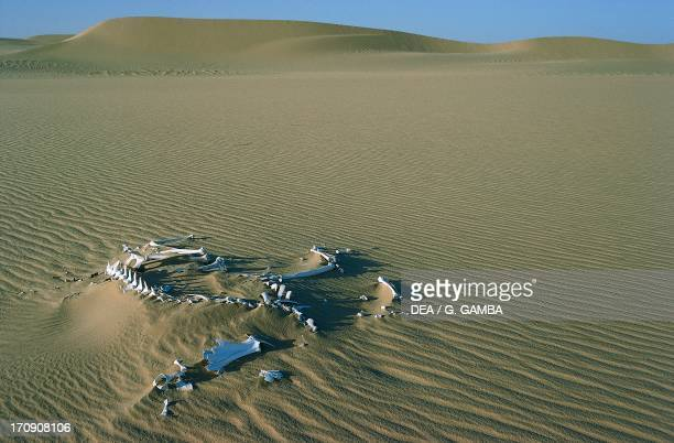 Camel skeleton Tenere Desert Air and Tenere Natural Reserves Niger