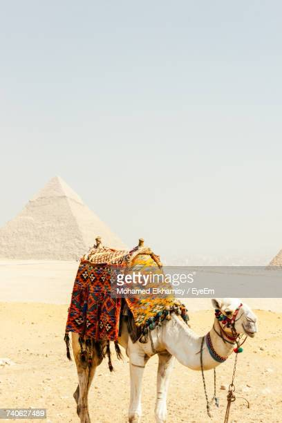 Camel Standing At Giza Pyramids Against Sky