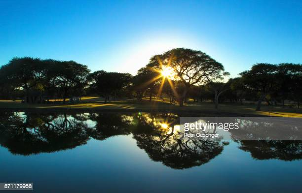 Camel thorn tree forest reflecting in a pond at sunrise.
