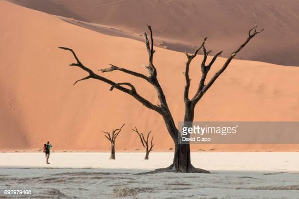 Camel thorn trees in Deadvlei, Sossusvlei in Namibia